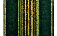 """<p><strong>LINEAGE  </strong>1994  80"""" x 48""""</p>"""