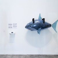 <p><em>A Shark Rots from the Head Down.&nbsp;</em>2019.&nbsp;</p>